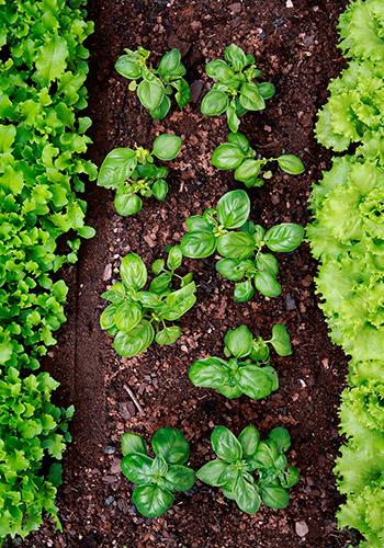 Expoplant vendita e acquisto online di piante arbusti for Piante da orto vendita online