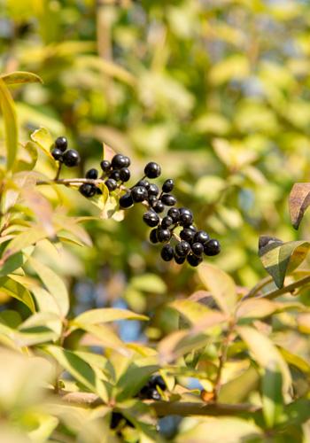 Expoplant vendita e acquisto online di piante arbusti for Vendita semi fiori
