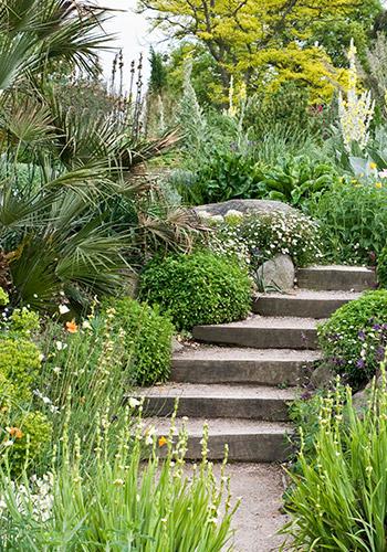 Expoplant vendita e acquisto online di piante arbusti for Acquisto piante
